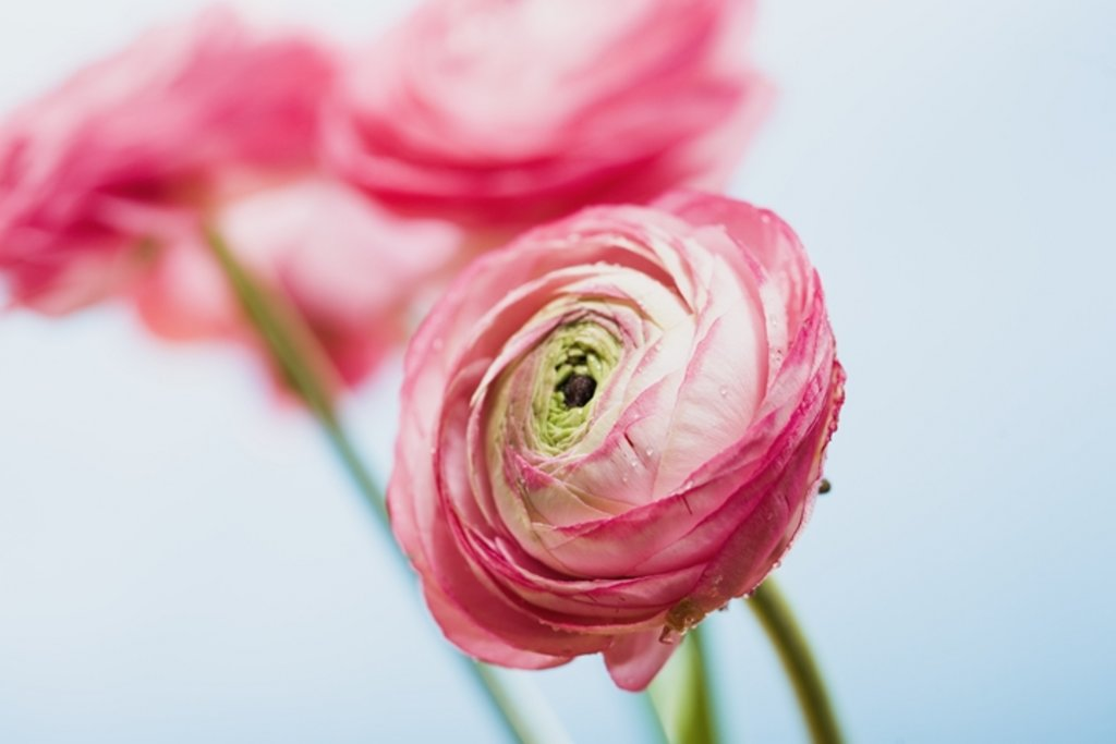 Frühlingsimpressionen