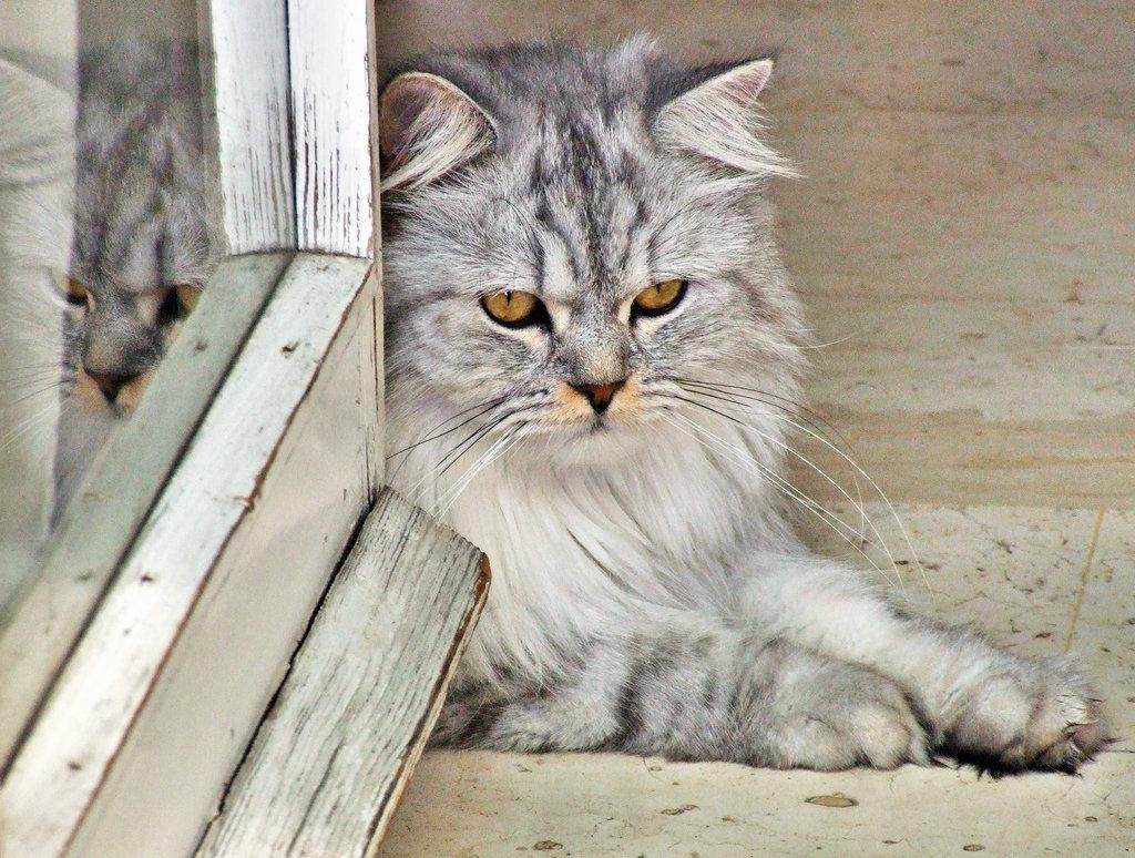 Alle lieben Miezekatzen!