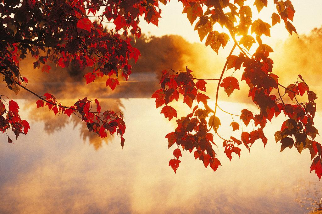 Herbst #1