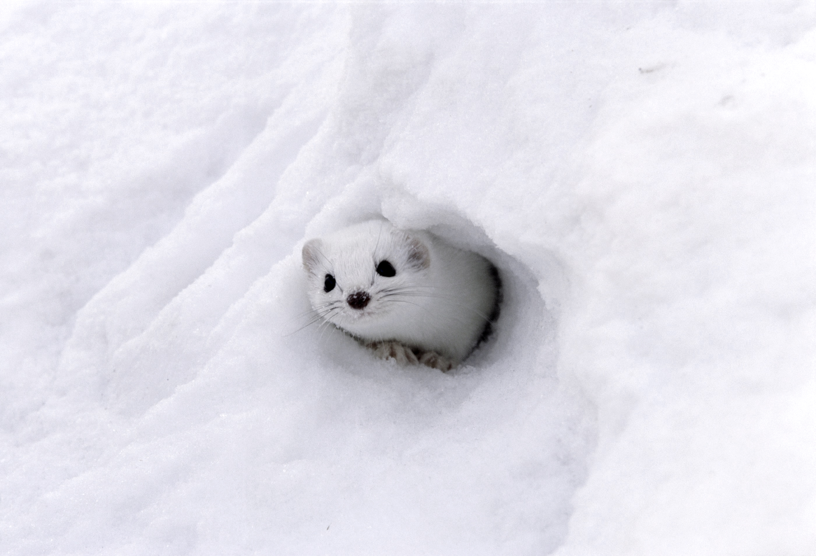This is not a Yeti!