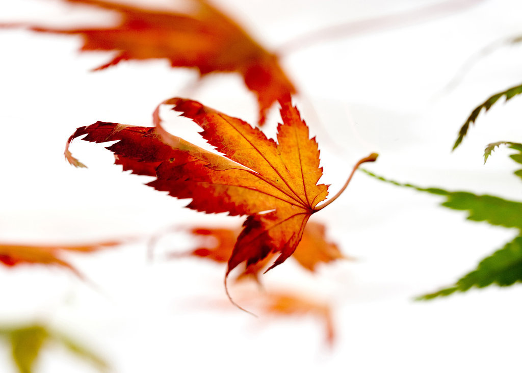 Blatt, Blätter, am Blättersten