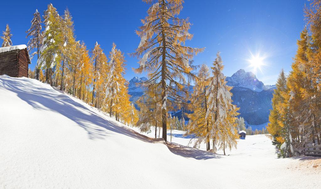 Herr Pritz im Schnee