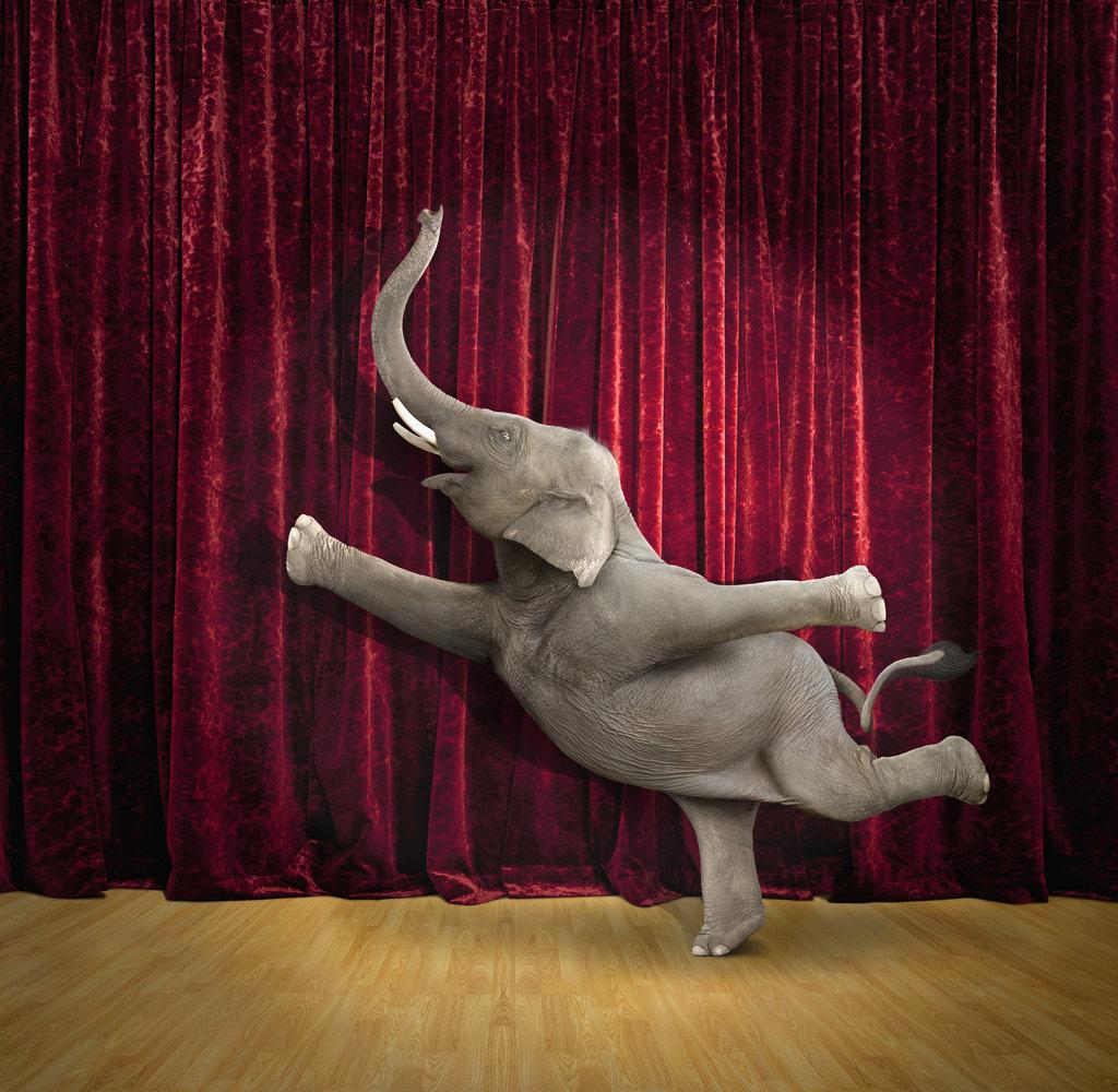 Der Elefant und die Kunst
