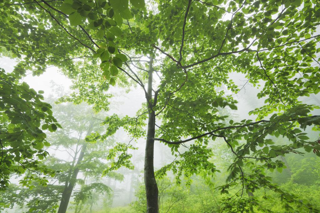 Deutsche Wälder