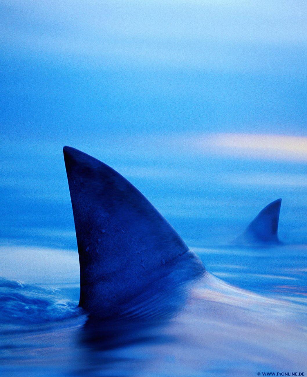 Blaubeeren im Ozean
