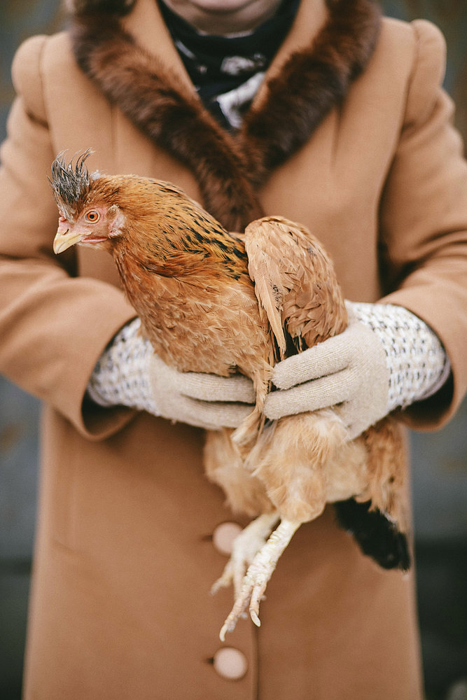 Me and my animal - a woman holds a rooster in her hands.
